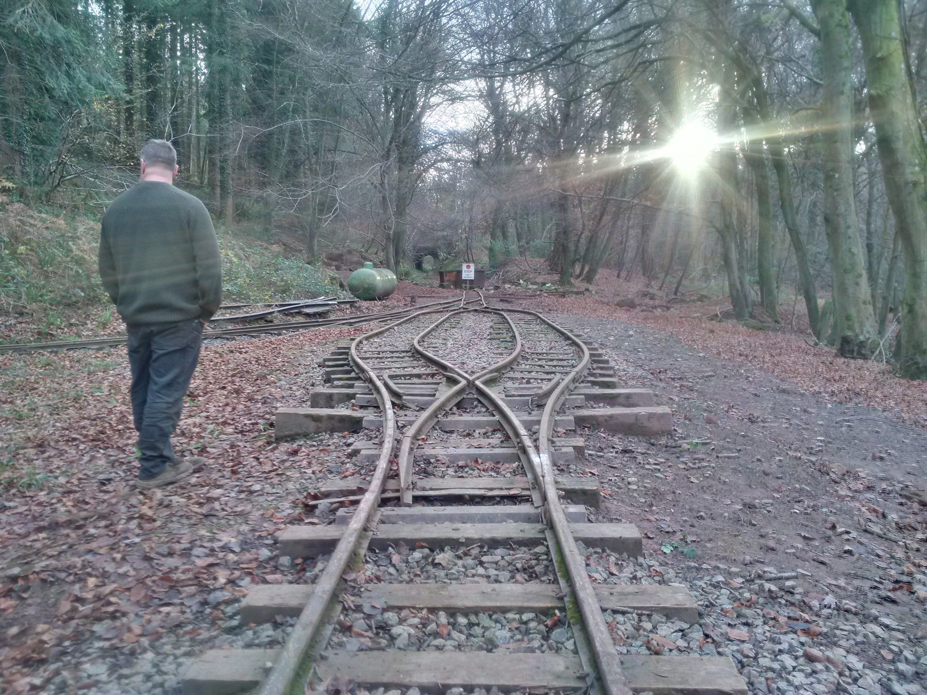 The running line after the leaves were removed
